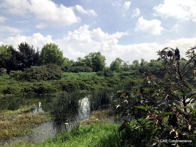 Vegetación acuática
